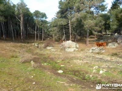 Fortines y Trincheras: Río Cofio; selva de irati buitrago de lozoya trekking sierra de gredos